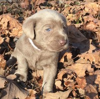 Small Puppy In the Leaves